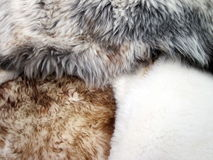 Different colors fur Stock Photography