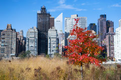 Different colors of leaves Fall Manhattan NYC Royalty Free Stock Photography