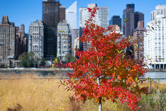 Different colors of leaves Fall Manhattan NYC Royalty Free Stock Images