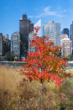 Different colors of leaves Fall Manhattan NYC Royalty Free Stock Photo
