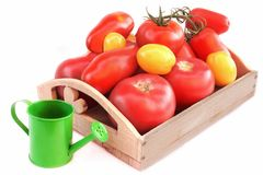 Different colors and size Tomatoes in wooden box Royalty Free Stock Images