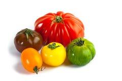 Different colors tomatos, Solanum lycopersicum Stock Images