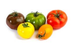 Different colors tomatos, Solanum lycopersicum Royalty Free Stock Image