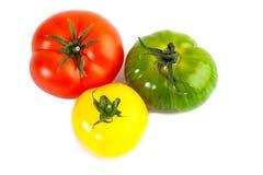 Different colors tomatos, Solanum lycopersicum Stock Image