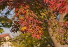Different colors on the tree royalty free stock photo