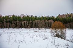 Different colors of the winter forest in Russia stock photography