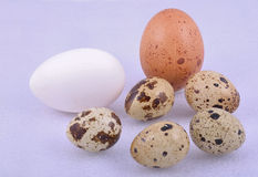 Different colour egg Royalty Free Stock Photography