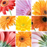 Different colour gerberas Royalty Free Stock Image