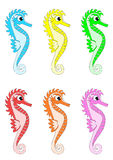 Different colour Seahorses Stock Images
