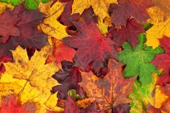 Different coloured autumn leafs on the ground royalty free stock image