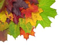 Different coloured autumn leafs on the ground stock photo