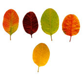 Different coloured leaves Royalty Free Stock Photography