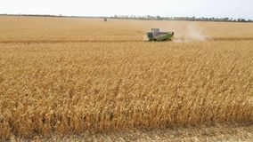 Different combine machines harvesting corn in the field stock footage