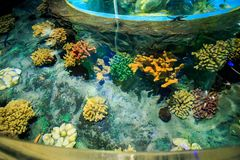 Corals on Tank Bottom in Oceanarium from Tourist Tube Stock Image