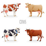 Different cows Royalty Free Stock Image
