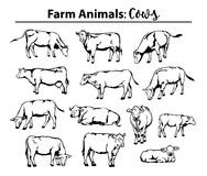 Different cows set in contour, outline. Side view, front view, laying, standing, grazing, walking etc Stock Photos
