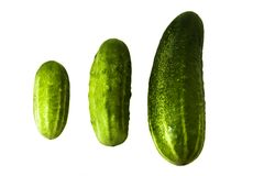 Different cucumbers Stock Images