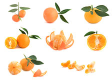 Different cultivars of tangerines. Isolated on white background Stock Photos