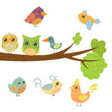 Different Cute Bird Chicks Sitting And Flying Around Tree Branch Royalty Free Stock Photos