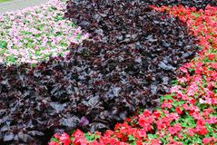 Different decorative pink, red, green flowers background Royalty Free Stock Image