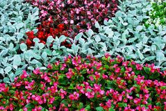 Different decorative pink, red, green flowers background Royalty Free Stock Photography