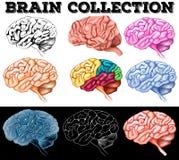 Different design of human brain Stock Photos
