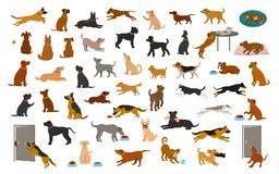 Different dog breeds and mixed set, pets play running jumping eating sleeping, sit lay down and walk, steal food, bark, protect. i. Solated cartoon vector royalty free illustration