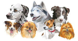 Different dog breeds set Stock Photos