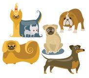 Different dogs. Yorkie, chihuahua, english bulldog, pug, dachshund and pekingese vector cartoons Stock Image