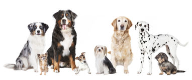 Different dogs Royalty Free Stock Photos