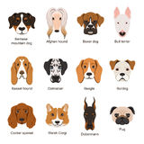 Different dogs. Vector illustrations set isolate on white vector illustration