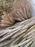 Different dried agriculture pattern Stock Image