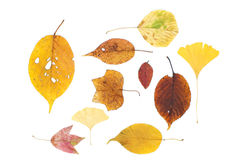 Different dry leaves Royalty Free Stock Image