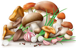 Different edible mushrooms Stock Photography