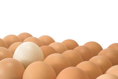 Different Egg. S on a white background Royalty Free Stock Photography