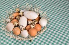 Different eggs Stock Photos