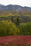 Different fall colors moving up the side of mountain in autumn, Yukon Royalty Free Stock Photos