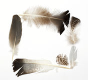 Different feathers frame Stock Images