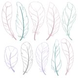 The different feathers are painted outline on a white background. Painted in delicate colors. The different feathers are painted on a white background. Painted Royalty Free Stock Images