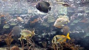 Different fish stock image