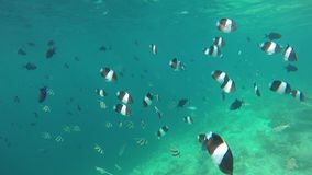 Different fish in the reef. On the Maldives stock footage
