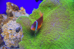 Different fish and sea creatures in the aquarium Stock Photography
