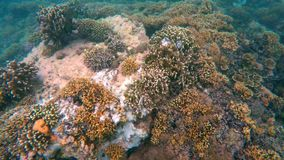Coral reef with fishes stock video footage