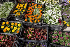 Different flower plants. Royalty Free Stock Photography