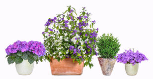 Different flower pots Royalty Free Stock Image