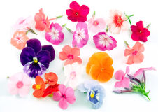 Different flowers Stock Image