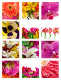 Different flowers Stock Images