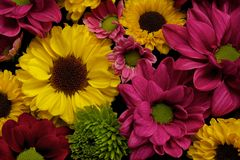 Different flowers Royalty Free Stock Photography