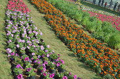 Different flowers at flower show, ahmedabad Stock Image