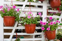 Different flowers in flowers market. Royalty Free Stock Photo